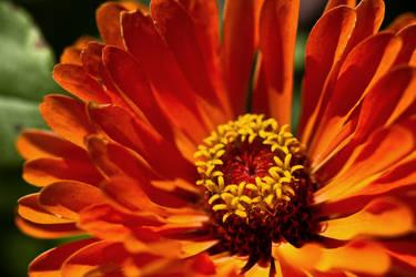 flower469 by redbeard31