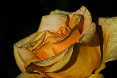flower481 by redbeard31