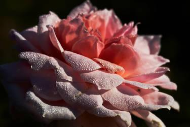 flower482 by redbeard31