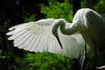 aves478 by redbeard31