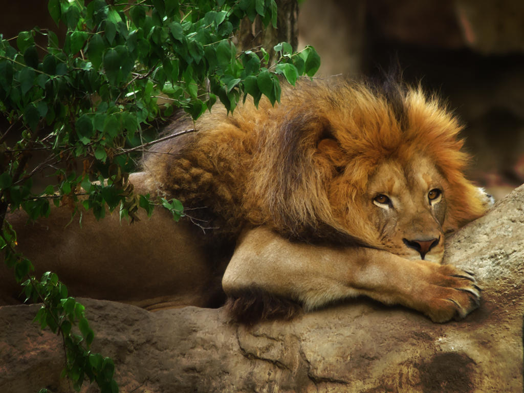 lion283 by redbeard31
