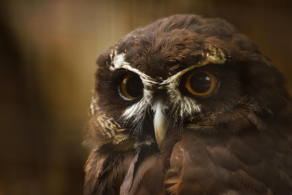 aves557 by redbeard31