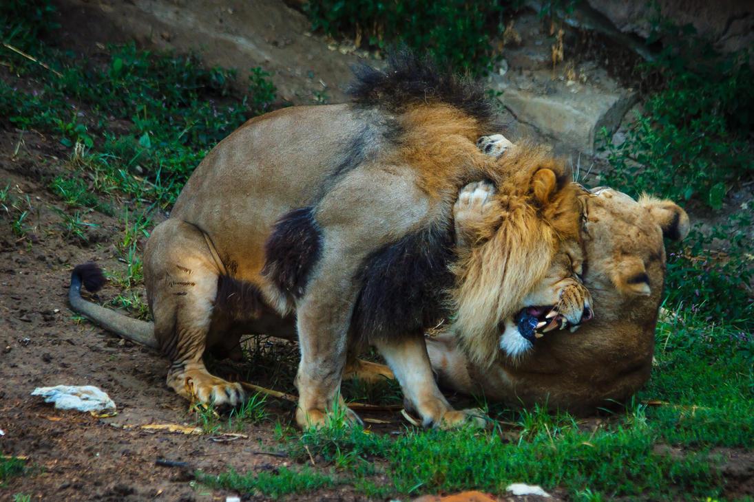 lion616 by redbeard31