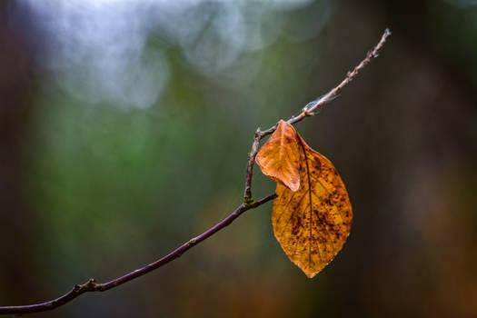 autumn67