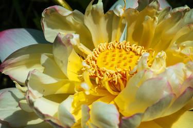 lotus119