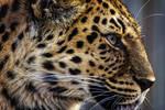 leopard553