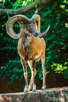 urial68