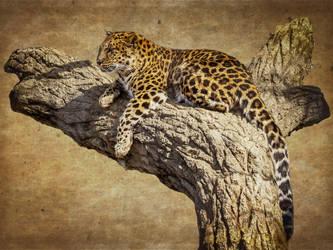 leopard568