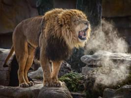 lion656