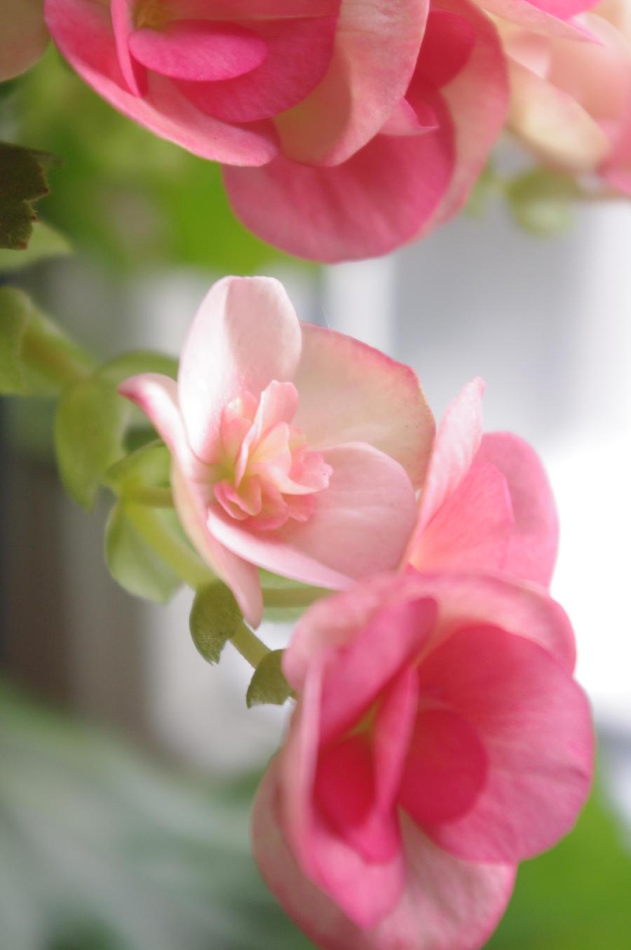 Baby Pink by LucyLostInWonderland