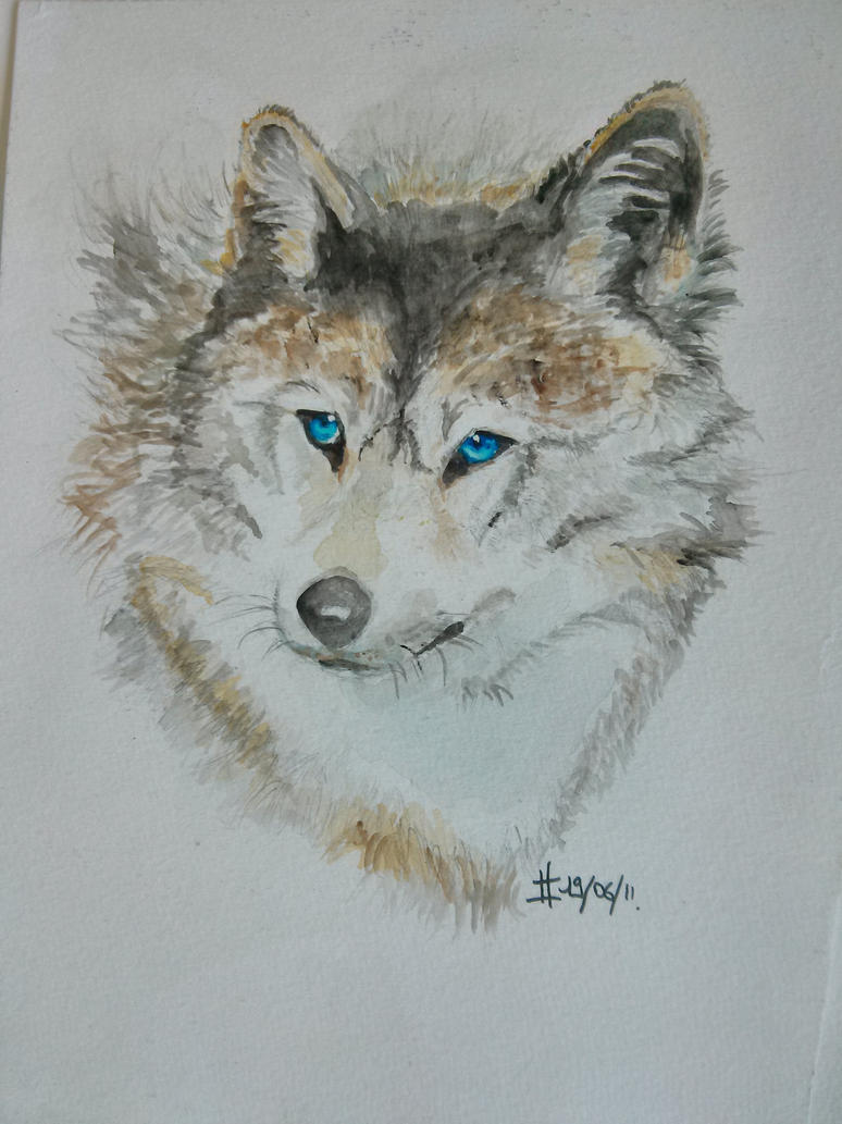 Watercolor wolf by lauraacan on DeviantArt