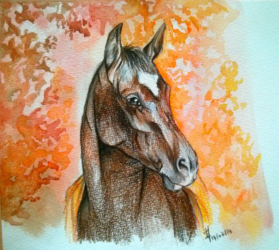 War horse by lauraacan