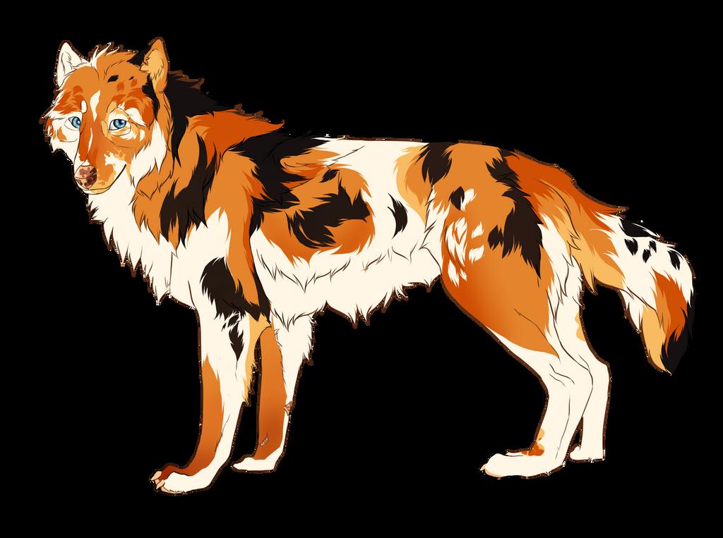 Koi wolf [needs a name]