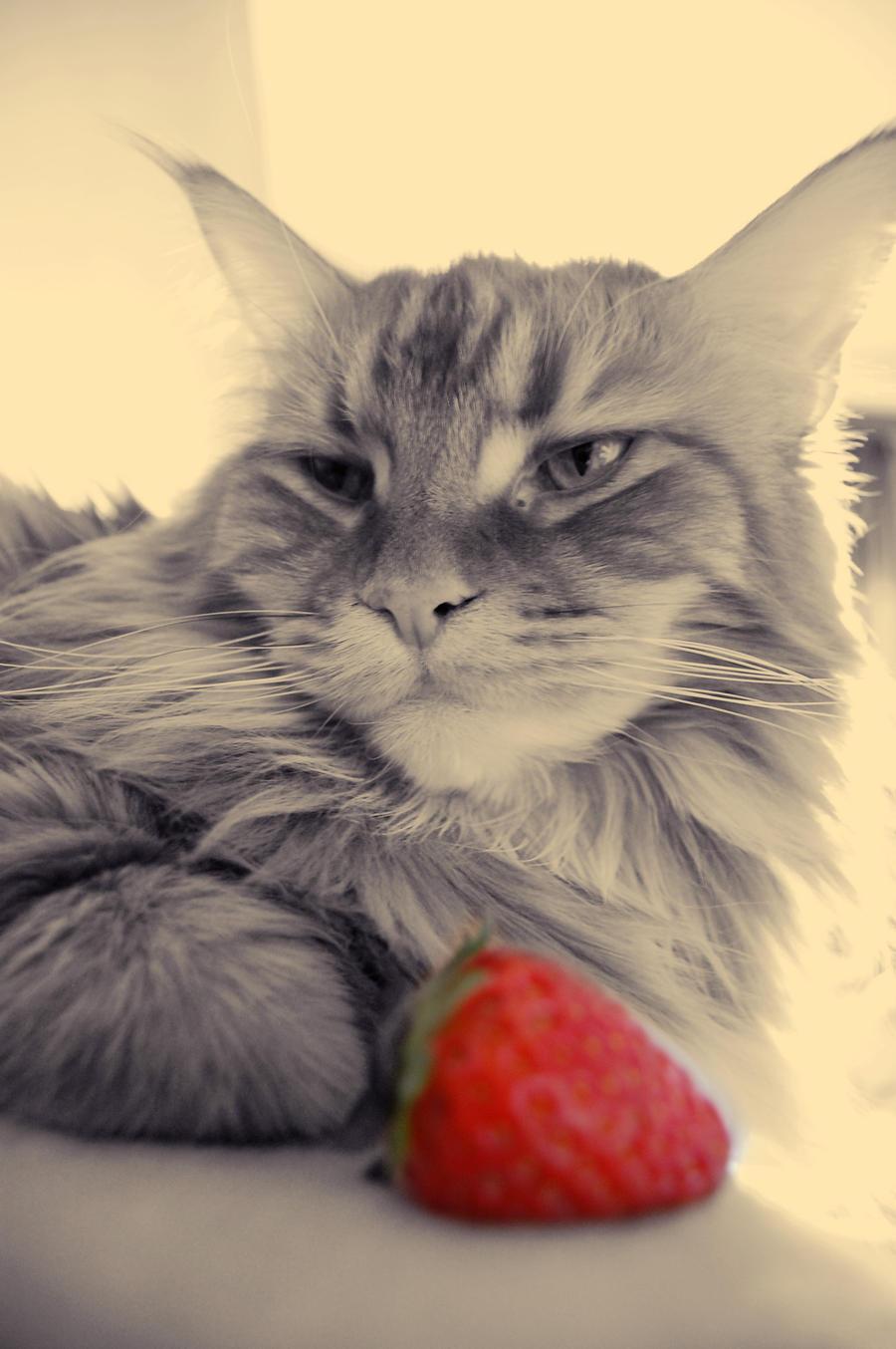 Strawberry by killashandra-ree