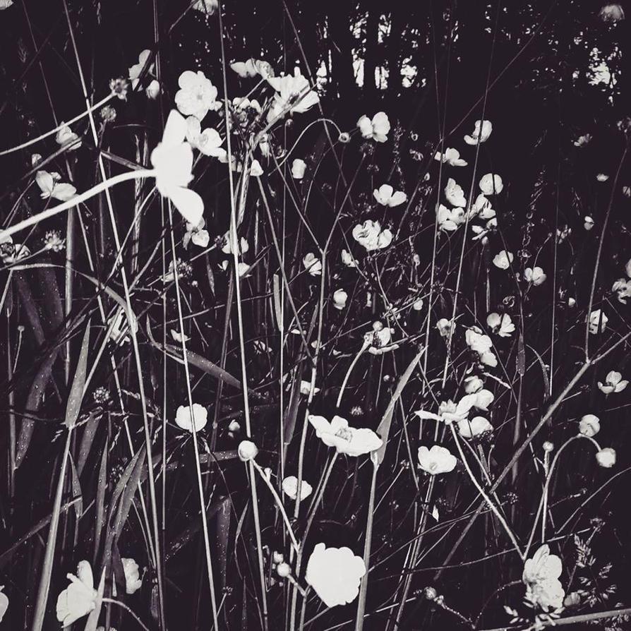 Serene by Alaersu-Aetris