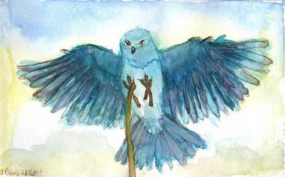 Mountain Bluebird - sketch
