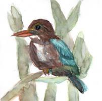 White-throated Kingfisher - 2018July02 by NekoMarik