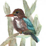 White-throated Kingfisher - 2018July02