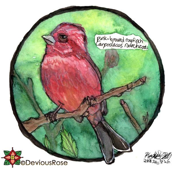 Pink-browed Rosefinch - World Watercolour Month 8 by NekoMarik