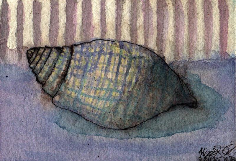 Seashell Study WWM Day 19 by NekoMarik