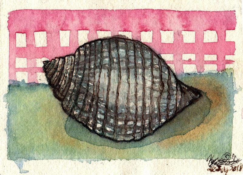 Seashell Study II - WWM Day 20 by NekoMarik