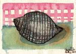 Seashell Study II - WWM Day 20