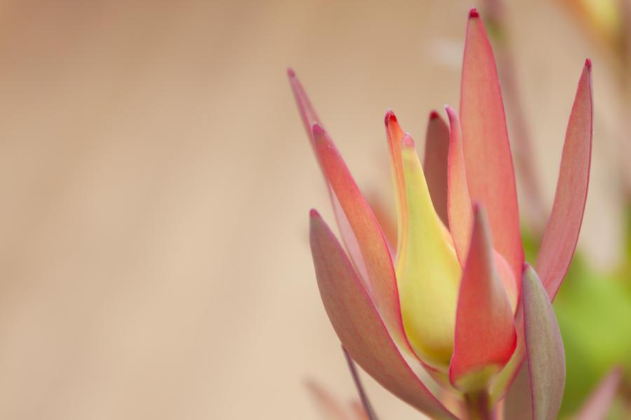 Flower Background by imladris517