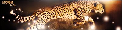 Cheetah by ctokun03