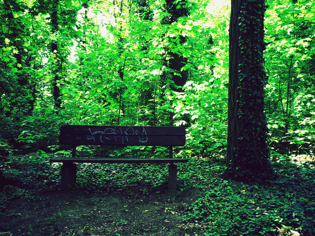 forest bench by depokid