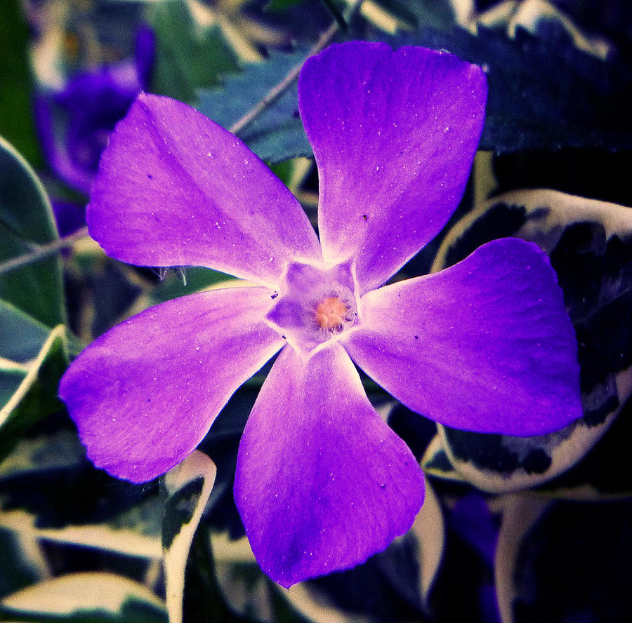 hawaii flower by depokid