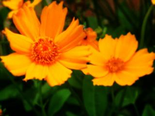 Flowers by leeleewolfisaduck
