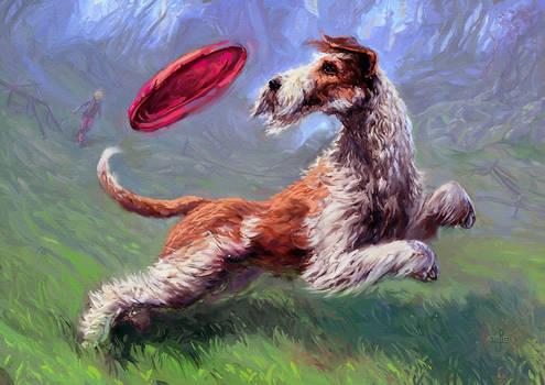 Dogfrisbee Freestyle