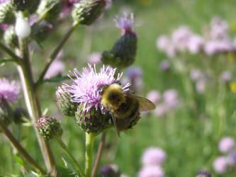 bumblebee by psychotic-naruto-fan