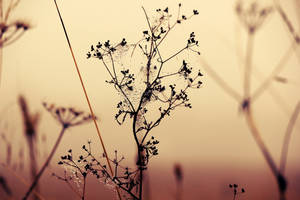 Wonderful world by By-who-photography