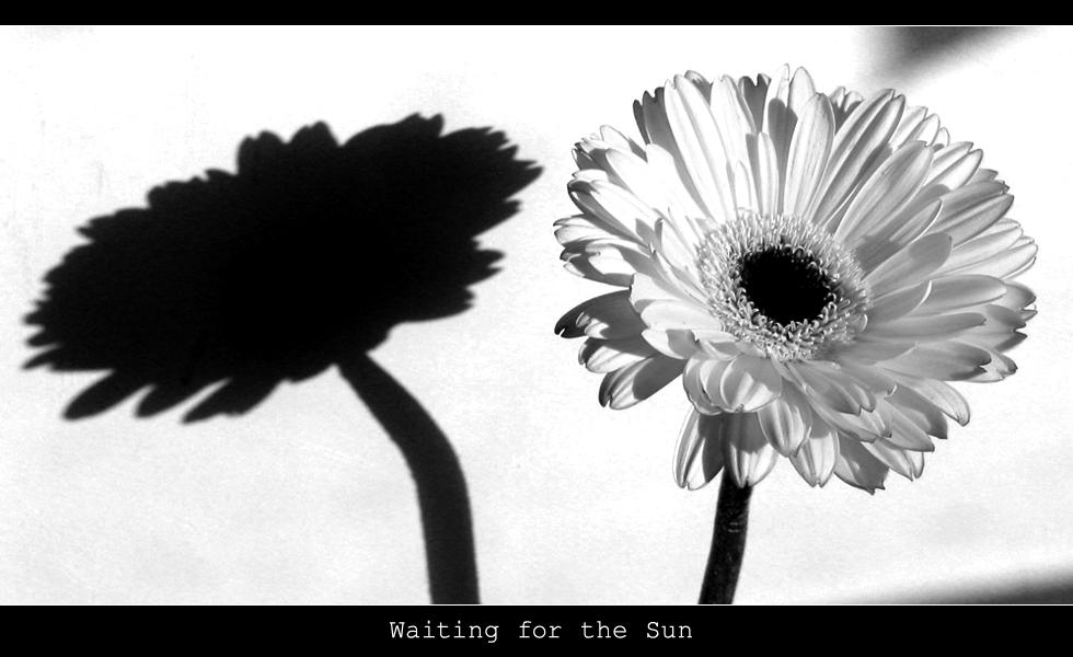 Waiting for the Sun II by Gogha