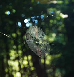 Suspended Web 3 by Salemburn