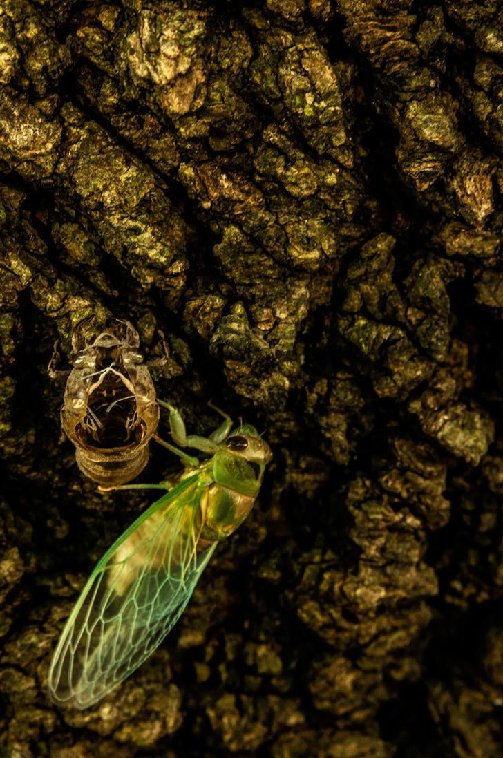 Tale of the Emerald Cicada by Salemburn