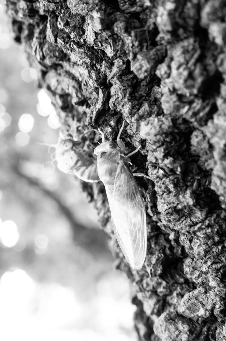 Tale of the Emerald Cicada 2 by Salemburn