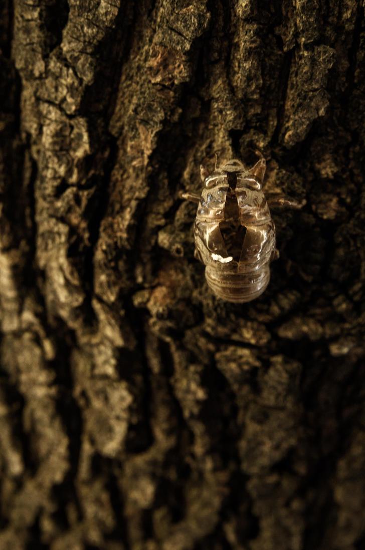 Tale of the Emerald Cicada 3 by Salemburn