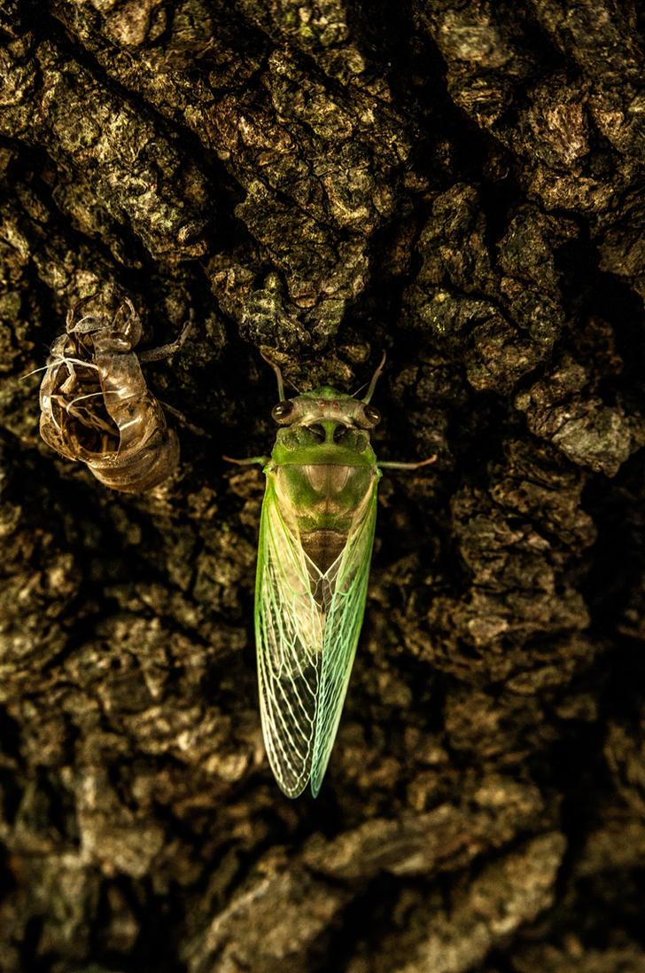 Tale of the Emerald Cicada 4 by Salemburn
