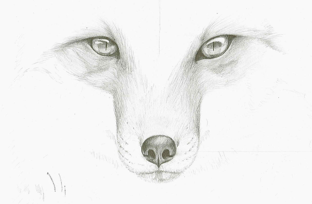Fox face drawing - photo#3