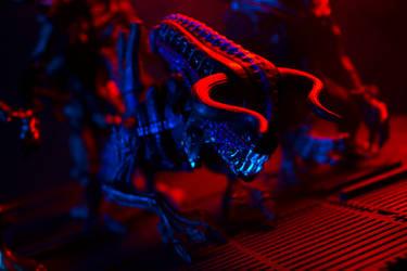 Bull Alien 1