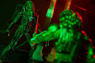 Alien Vs. Predator 11