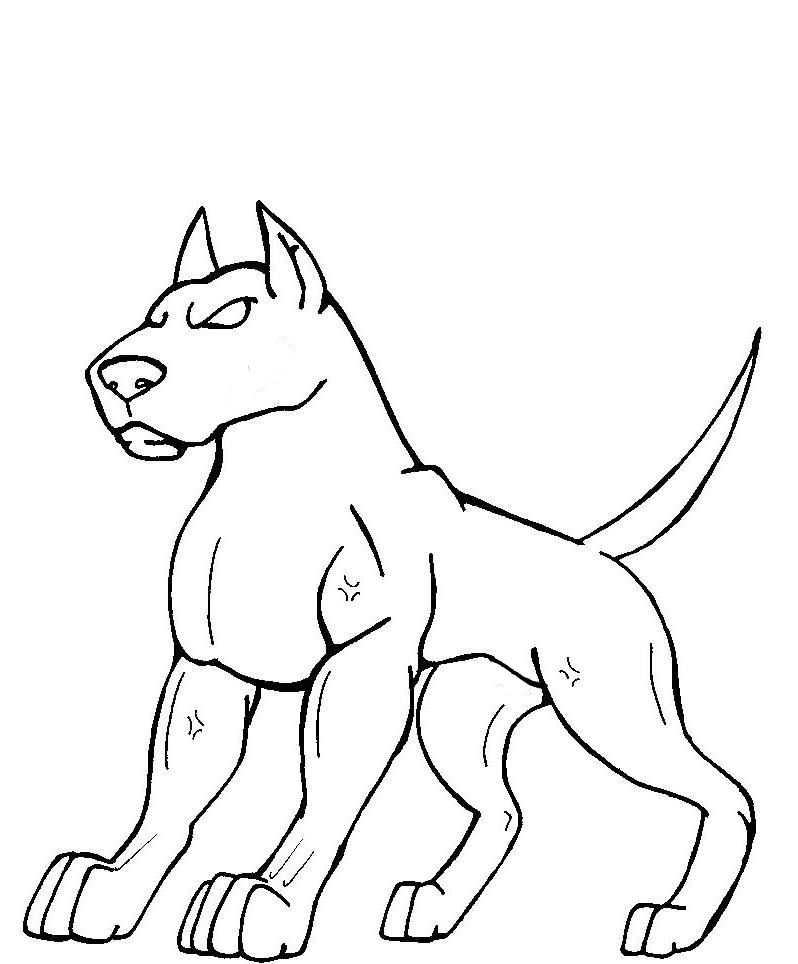 Bully Pitbull Drawing Pitbull lineart female by