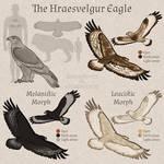 The Hraesvelgur Eagle | Tokota Handler Species
