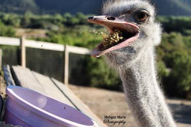Hungry Ostrich by fantasyhibiki