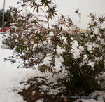 Snow Covered Bushes by Beje86