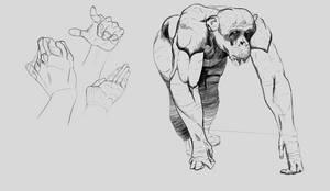 13,07,20 Chimpanzee studies