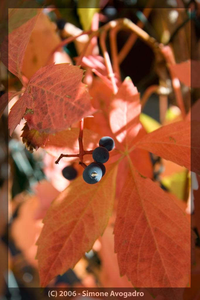 Autumn Fruits by HoneyJar