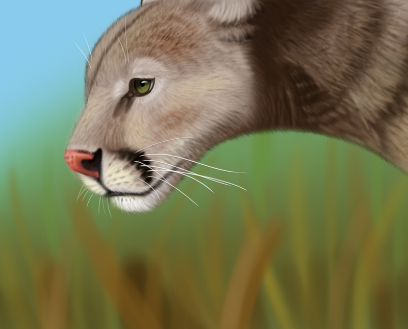 Cougar by MikhailoMMX